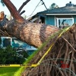 Hurricane Damage Cleanup
